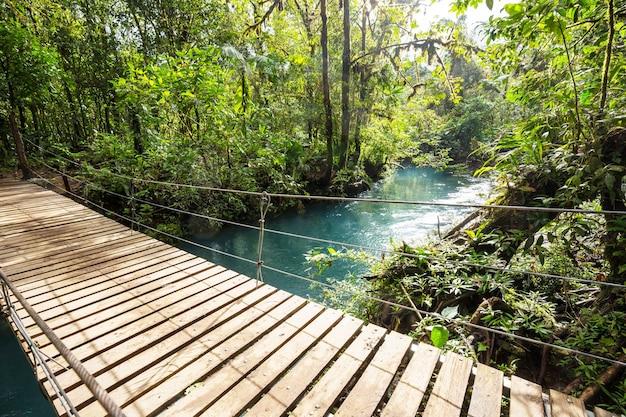 Вручение моста в зеленых джунглях, коста-рика, центральная америка Premium Фотографии