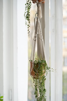 Handmade cotton macrame plant hanger hanging from the window in living room