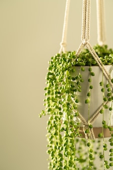 Handmade cotton macrame planter for indoor houseplant senecio rowleyanus. love plants