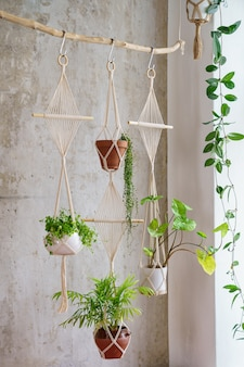 Handmade cotton macrame plants hanger hanging from wood branch over grey wall at home