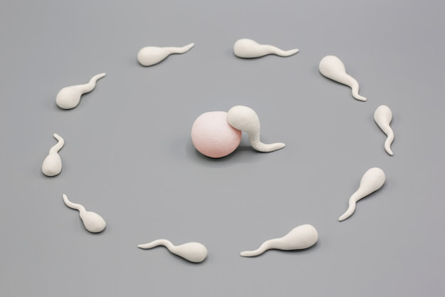 Handmade polymer clay figure of human sperm impregnate a fertile human egg