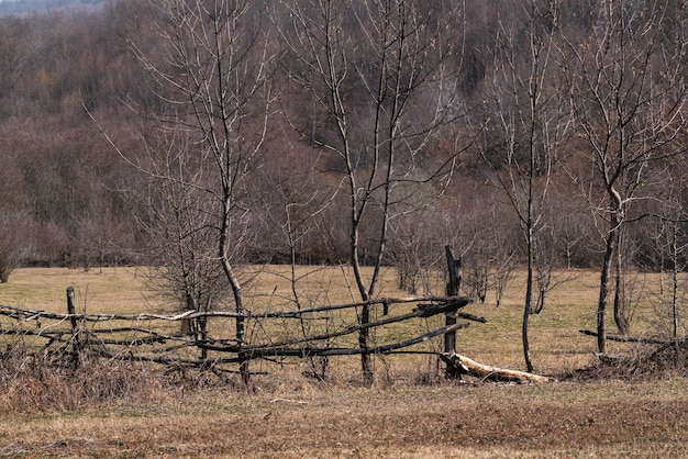 Деревянный забор ручной работы из тонких прутьев, ранчо