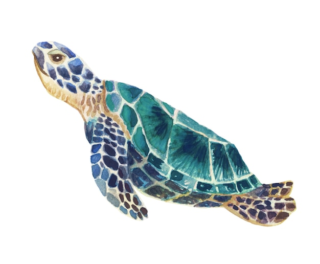 優雅に泳ぐ青いウミガメの手描き水彩イラスト