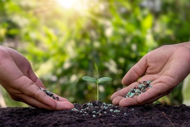 손과 태양 광선으로 흐린 식물 배경으로 토양에서 자라는 작은 식물