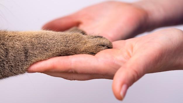 손과 흰색 배경 우정 개념에 고양이의 발