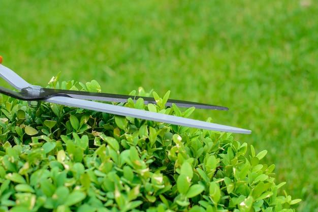 Руки режут кустовые машинки в саду