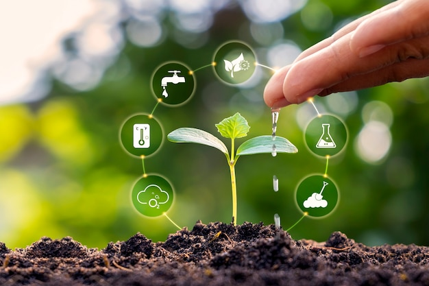 손은 에코 개념 식물 성장 인자 아이콘으로 토양에서 자라는 수생 식물과 나무를 운전합니다.