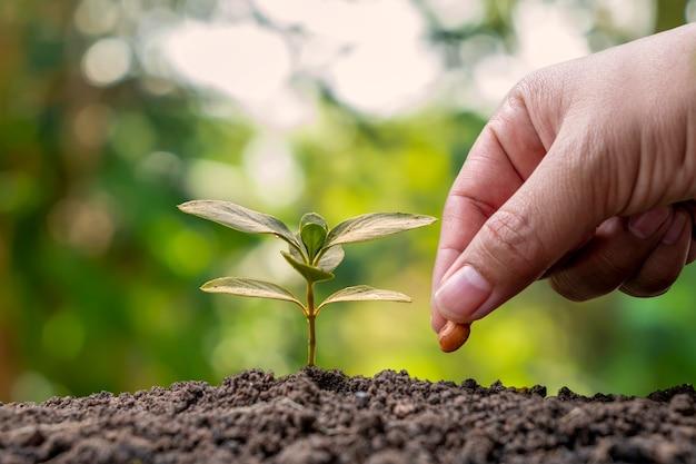 手は土壌と植物の成長に種を植え、植物の成長の概念と肥沃な環境で手で植えています