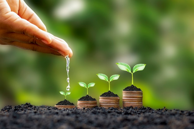 Hands are watering growing plants on coins amid blurred green nature background, financial concept and financial investment profit.