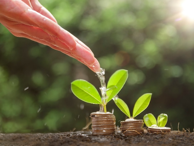 Hands are watering growing plants on coins. hand watering the plants growing on pile of coins stacked on the ground. financial and business management concept