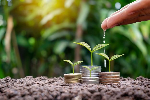 Руки поливают растущие растения на монетах на фоне размытого зеленого фона природы.