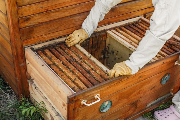 Hands of beekeeper pulls out from the hive a wooden frame with honeycomb