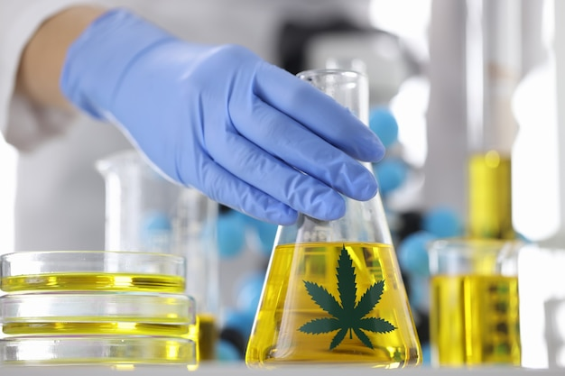 Hands in blue gloves hold a flask with transparent golden liquid with marijuana sticker in laboratory