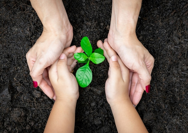Hands child and adult holding plant a tree sapling with on ground world environmen