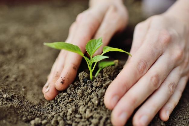 Руки крупным планом сажают в почву молодой зеленый росток или саженец.