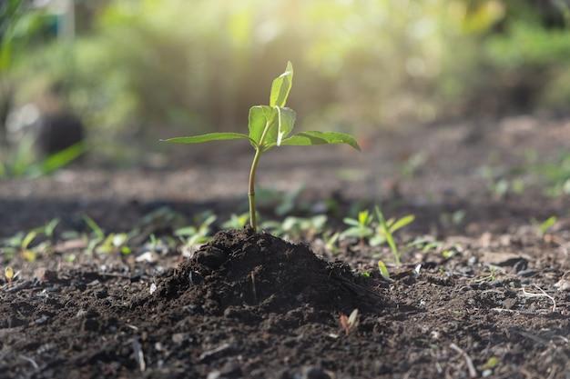 粘土と苗をつかむ手
