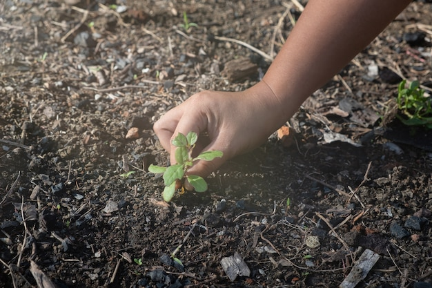 Hands clutching clay and seedlings