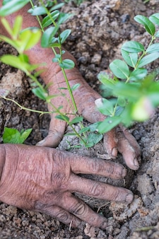 若い木を植える時の手、世界を救い、世界を癒し、自然を愛する