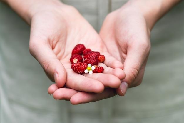 庭からの野生の新鮮な有機イチゴでいっぱいの手