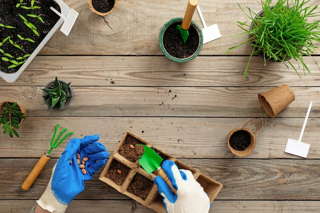 Hands of gardener puts seed in peat container with soil. gardening or planting concept.