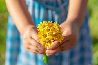 Hands give yellow wild flowers with love. Romantic feelings