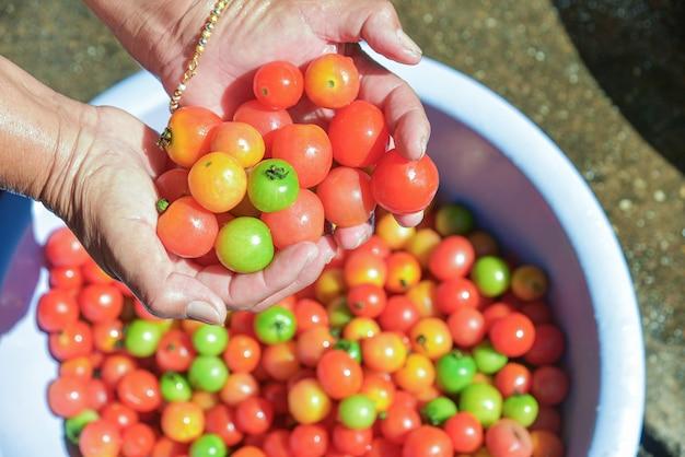 手は直射日光の下で積み上げトマトにカラフルなトマトを保持します