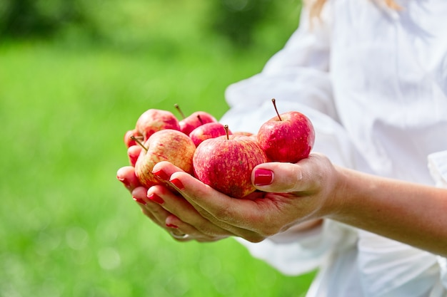 Hands hold red fresh apples
