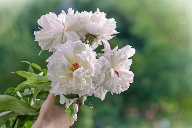 白牡丹の花束を持っている手おめでとう花のポスターや壁紙