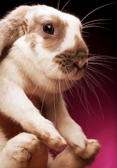 Руки держат кролика