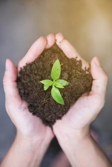 日光と緑の若い植物を保持している手