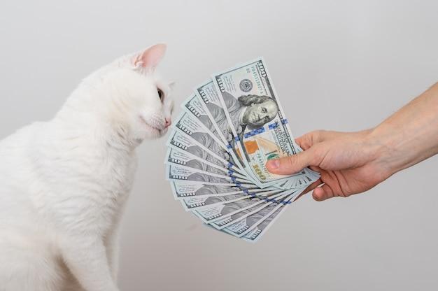 Руки держат купюру в сто долларов