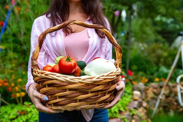 Hands holding basket of fresh summer vegetables. no face