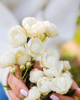 Hands holding blooming white roses