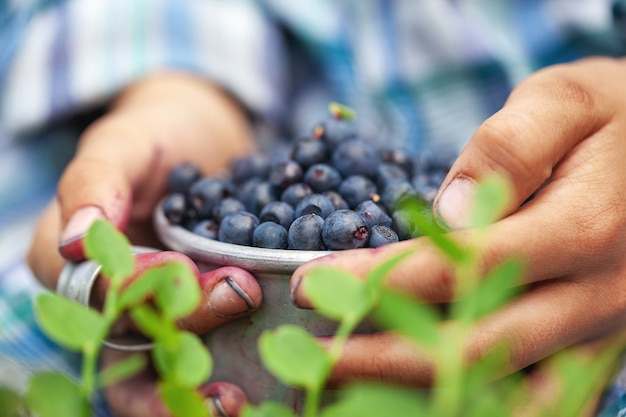 Hands holding bowl of freshly picked blueberries with leaves on the foreground