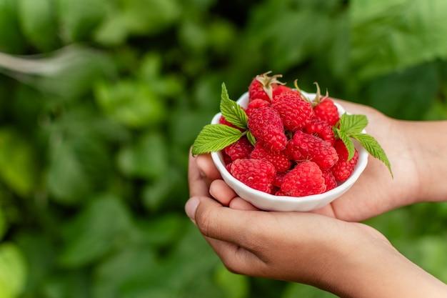 Руки, держа ярко-красную малину в зеленом саду. выборочный фокус. место для текста.
