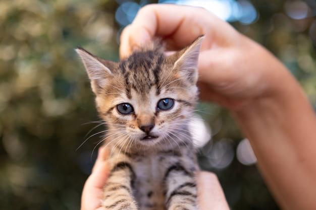 Hands holding a cute kitten in the garden