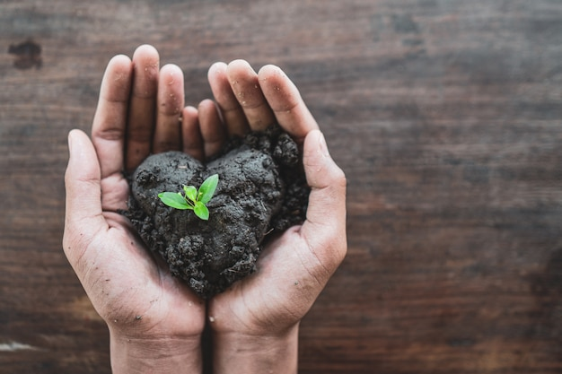 新しい植物の成長で土と土を握る手