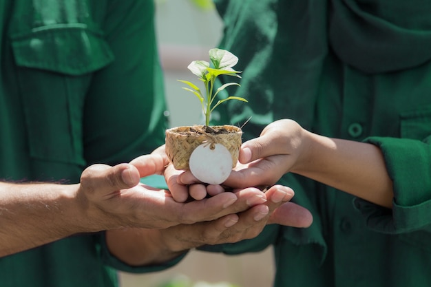 Hands holding flowerpot with little plant