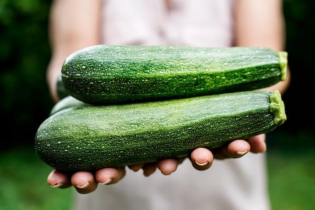 Hands holding a fresh zucchini