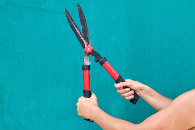 Hands holding garden shears isolated on turquoise backgroud. young gardener concept.