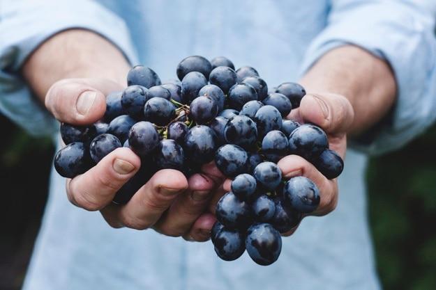 Руки держат виноградное букет