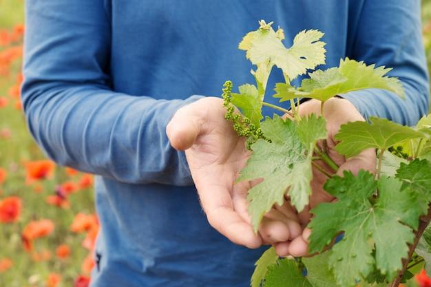 Hands holding grape leaf.