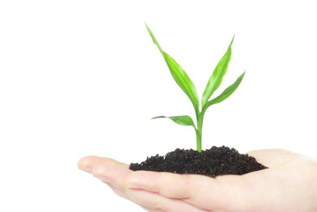 Руки, держа зеленое маленькое растение новой концепции жизни