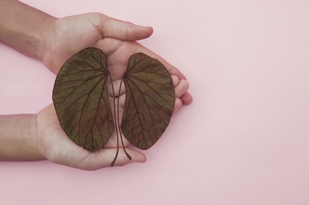 Hands holding kidney shaped leaves, world kidney day, national organ donor day, charity donation concept