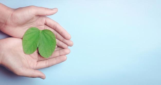 肺がエコ空気器官呼吸新鮮な空気の概念を形作るように葉を持っている手