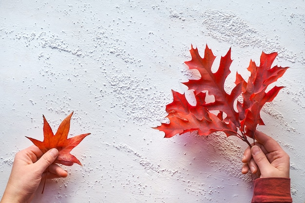 Hands holding maple leaf and twig with vibrant red oak leaves on white textured background.
