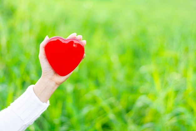 赤いハートを持っている手。 -ヘルスケア、愛、臓器提供、マインドフルネス、幸福、コンセプト