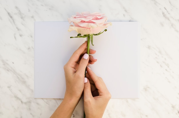 Руки держат розу на бумаге
