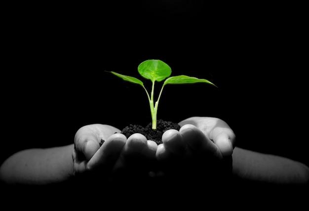 土に苗木を持っている手