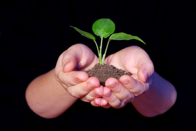 苗木を保持している手
